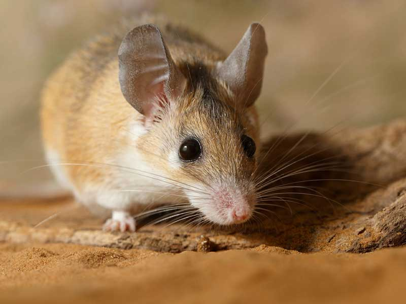Stamford Wildlife Control Experts mice rat stations get rid of your mice rat problems.