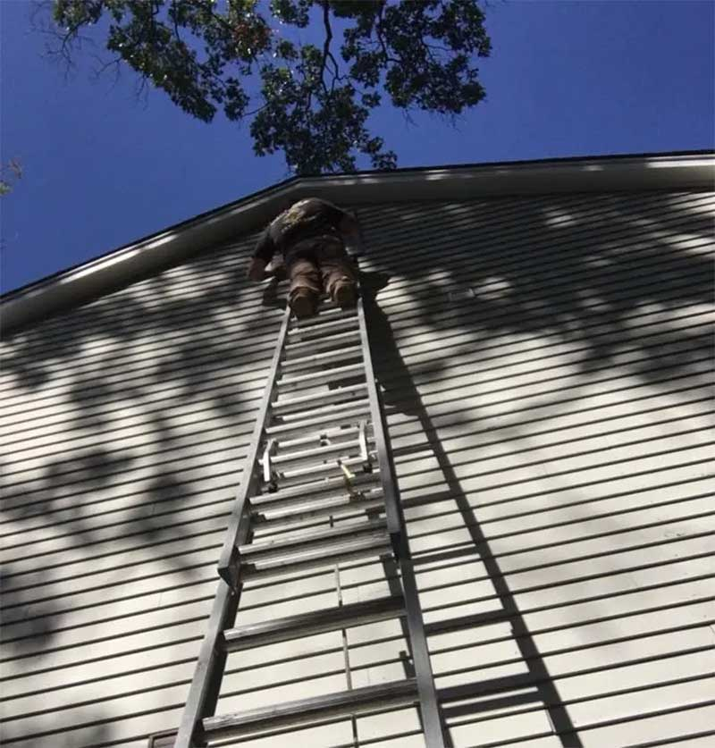 diy home bat removal in westport CT demand climbing on high ladders.